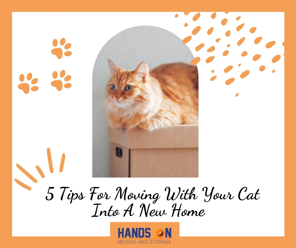 5 Tips For Moving With Your Cat Into A New Home