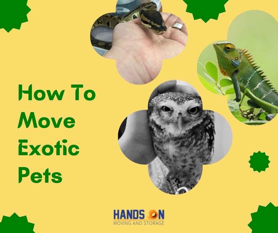 How To Move Exotic Pets