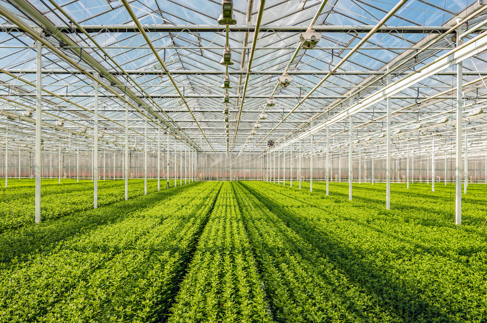 Environmental Sustainability in Cultivation: Part 1