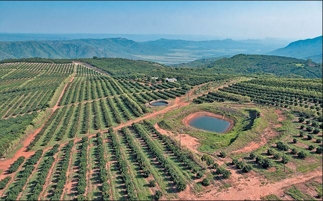 ZZ2's, 10 000t of avocados using nature-friendly methods