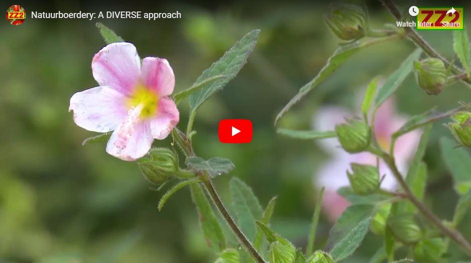 A diverse approach video