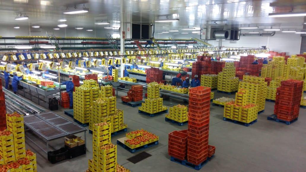 ZZ2 tomato packhouse