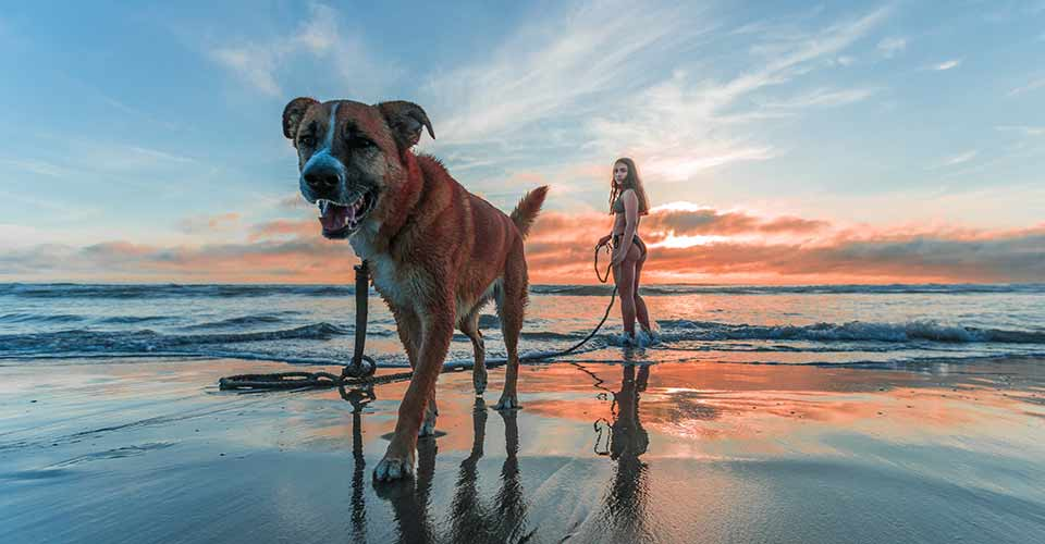 Walking Dog On Beach