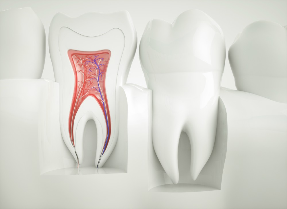 Image showing how a tooth is internally structured
