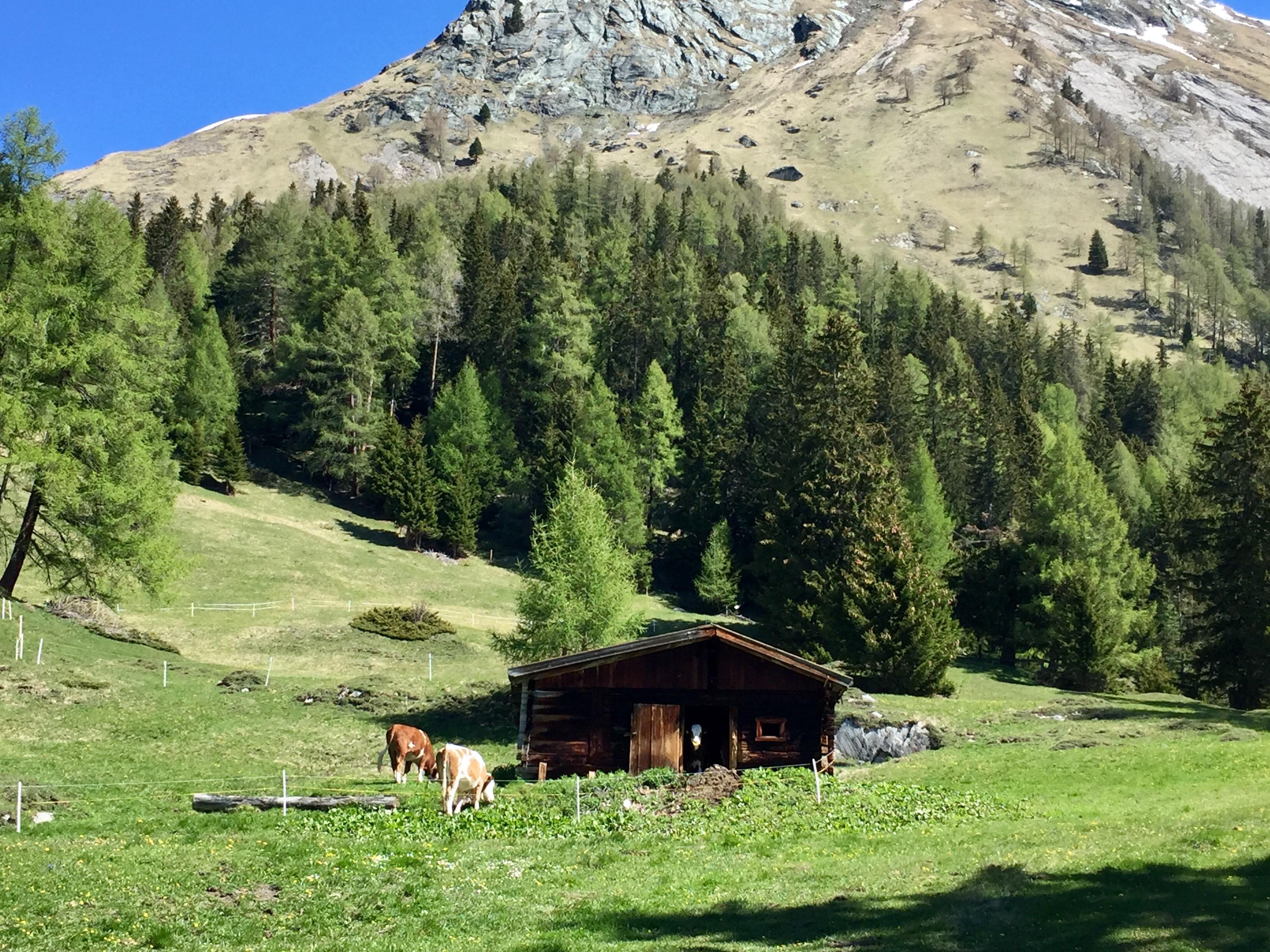 Apline pasture