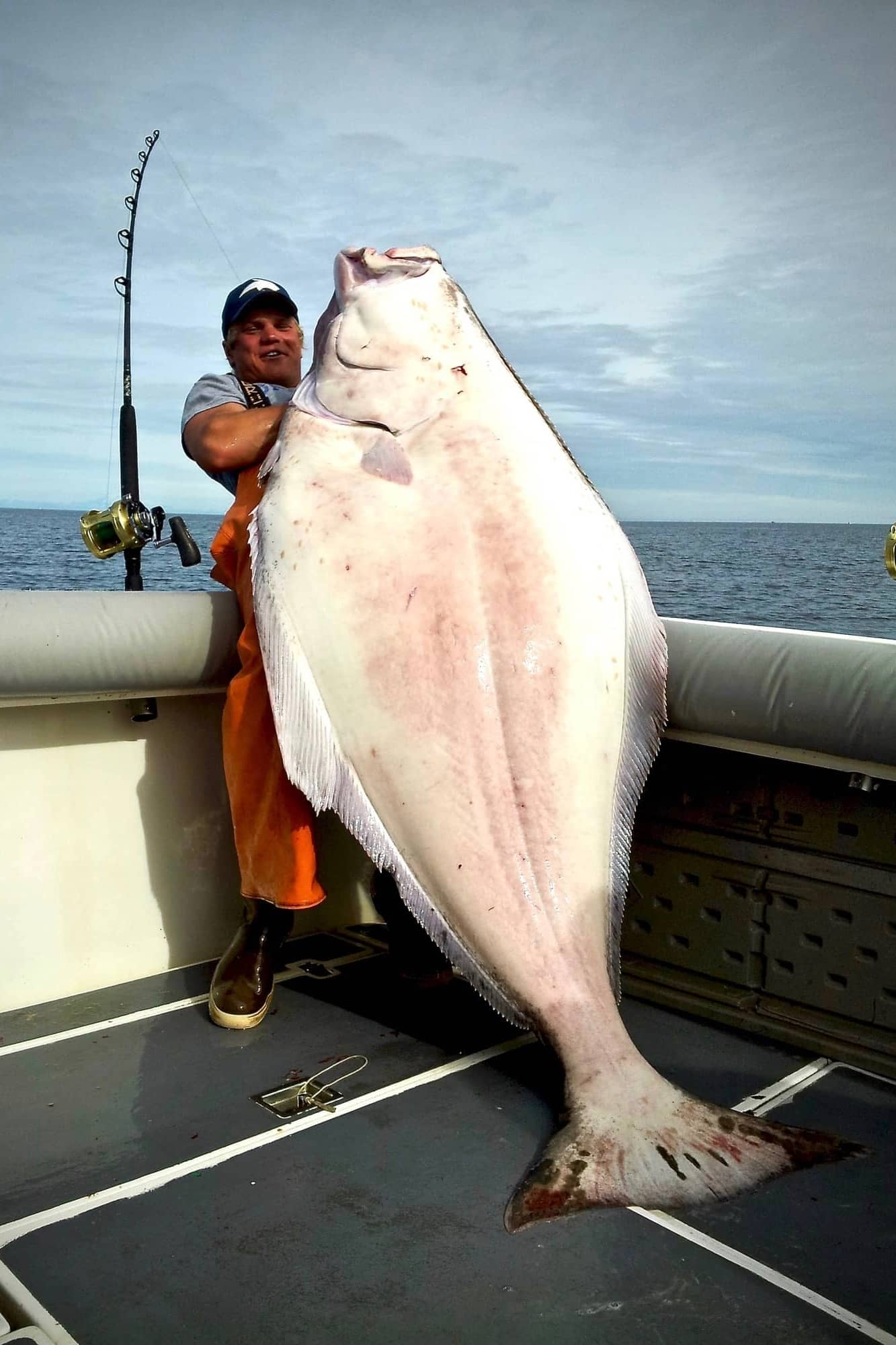 Deckhand with DeepStrike Sportfishing in Homer, Alaska hoisting massive halibut