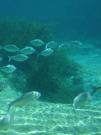 Photo of fish underwater at Rainbow Springs Park
