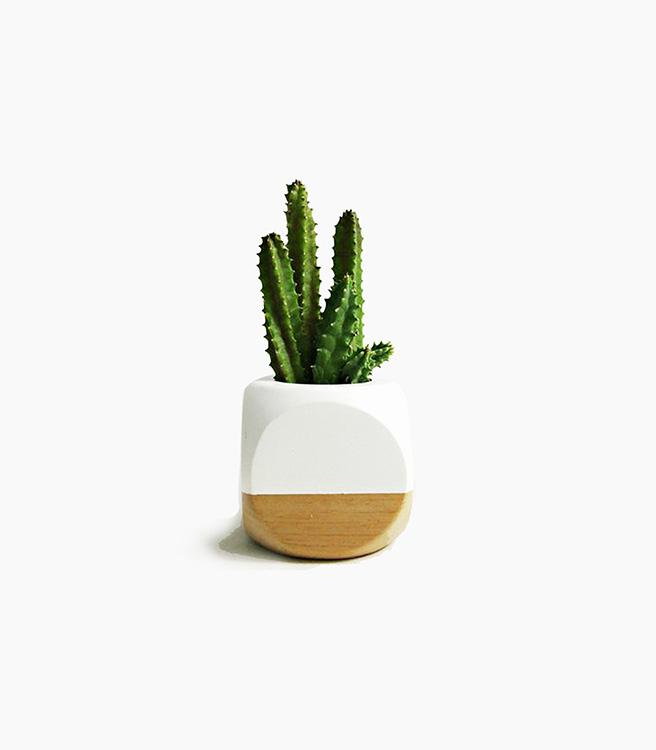Sea & Asters Mini Geometric Planter - White