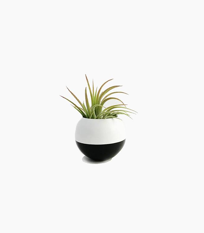 Sea & Asters Sphere Pod Planter - White/Black