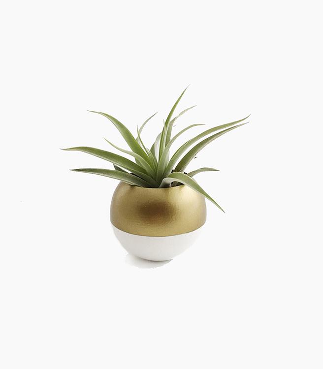 Sea & Asters Sphere Pod Planter - White/Gold