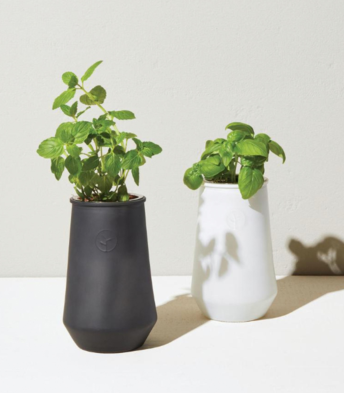 Modern Sprout Glass Indoor Garden Kit