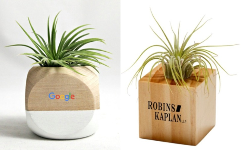 Live Airplant