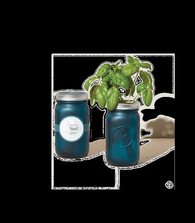 Modern Sprout Garden Jars Herbs - Basil