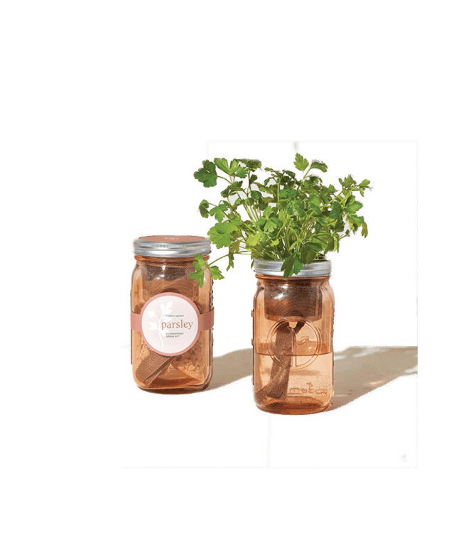 Modern Sprout Garden Jars Herbs - Parsley