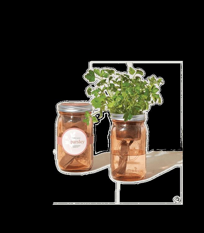 Modern Sprout Garden Jars Herbs - Parsley