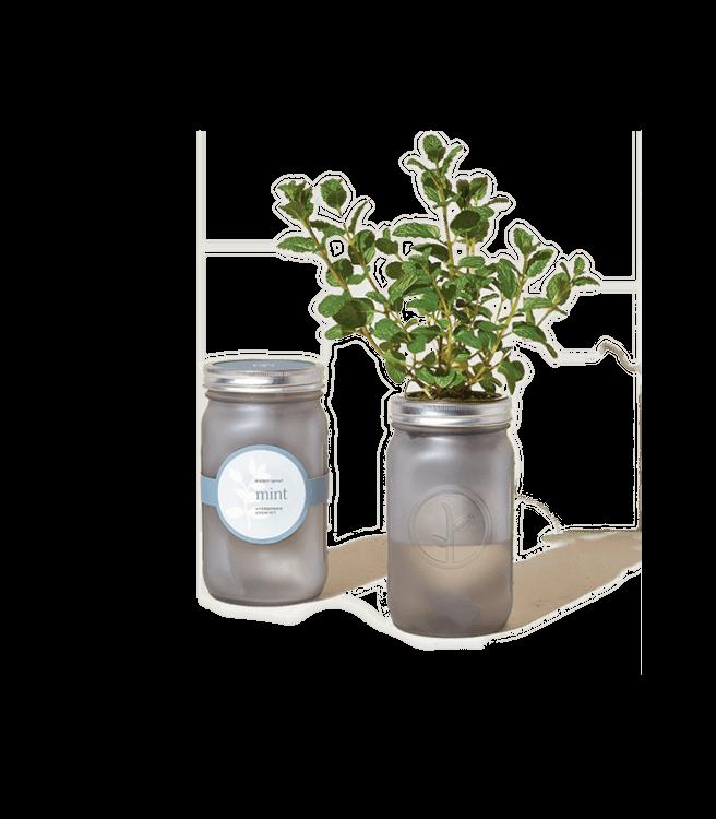 Modern Sprout Garden Jars Herbs - Mint