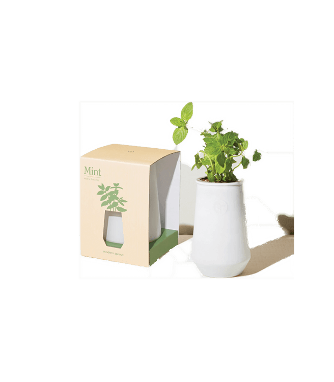 Modern Sprout Tapered Tumbler Grow Kit Mint