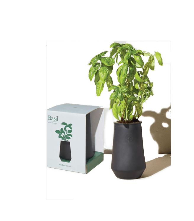 Modern Sprout Tapered Tumbler Grow Kit Basil