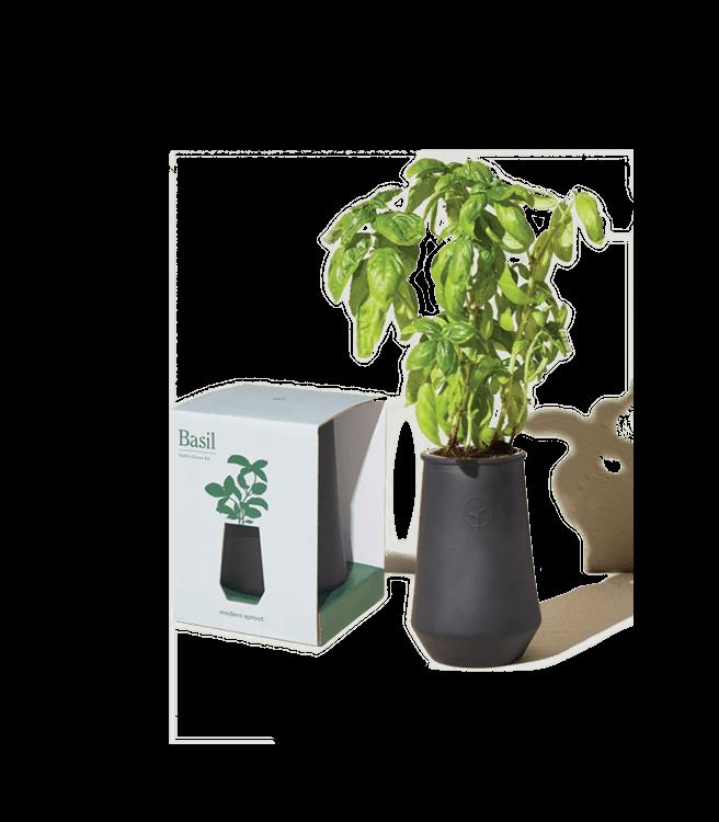 Modern Sprout Tapered Tumbler Grow Kit Basil