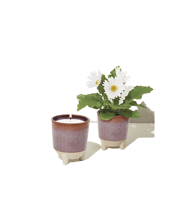 Modern Sprout Glow And Grow - Wildflower Fields