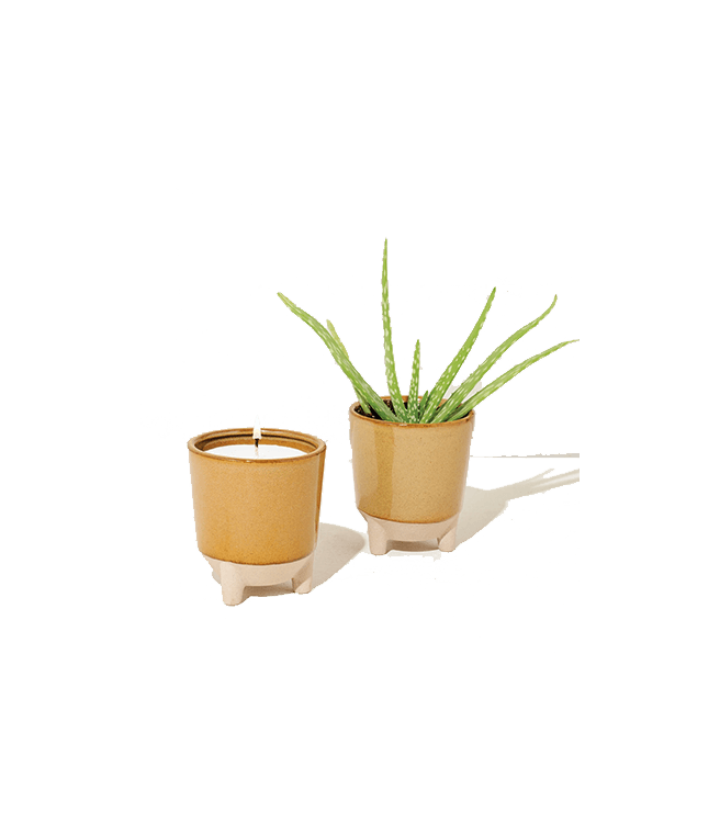 Modern Sprout Glow And Grow - Desert Oasis