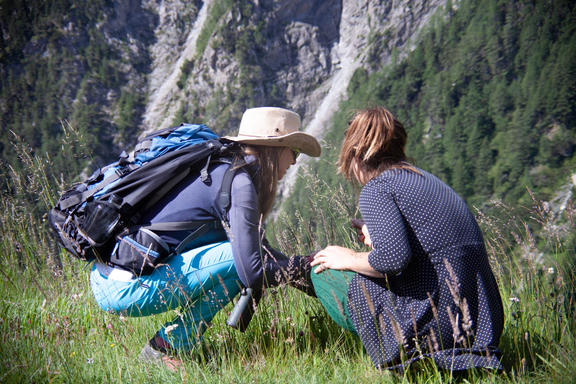 Austrian Alpine Summer Herbs