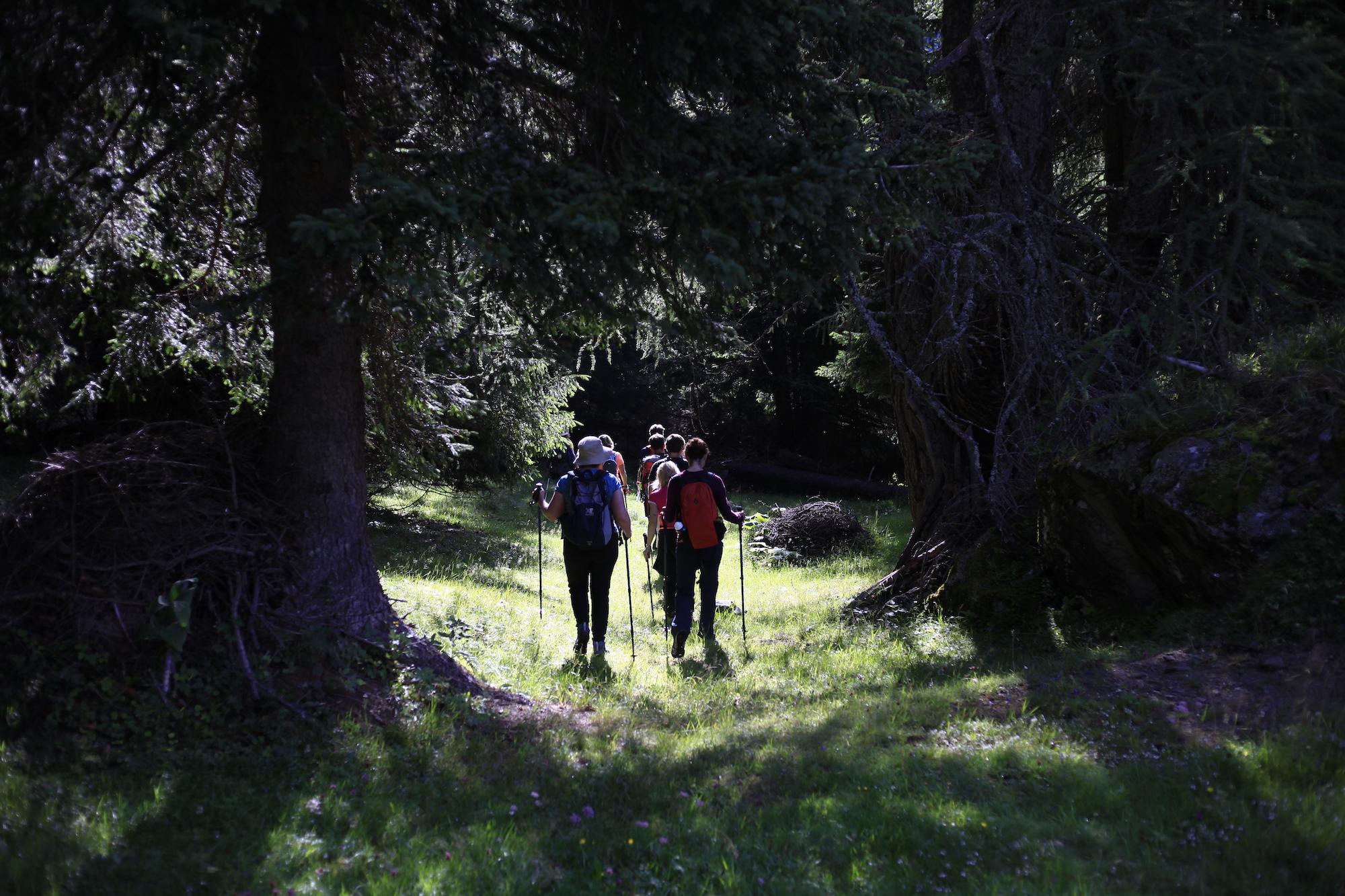 Hohe Tauern National Park Big five