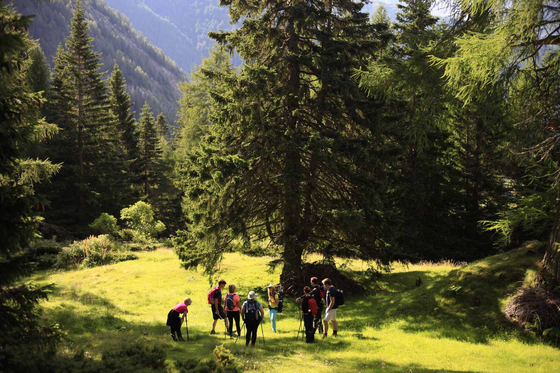 Hiking guide foraging for wild herbs in Austria