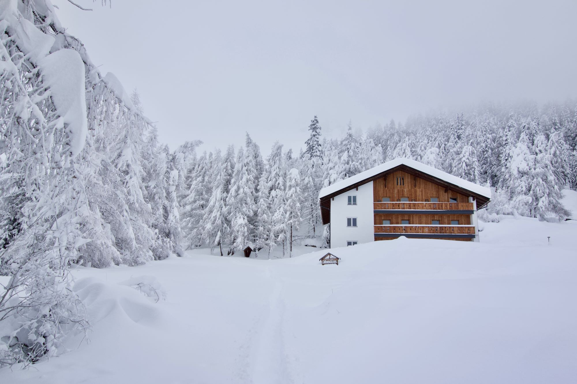 Snow covered trees at MoaAlm Mountain Retreat in Osttiroltirol