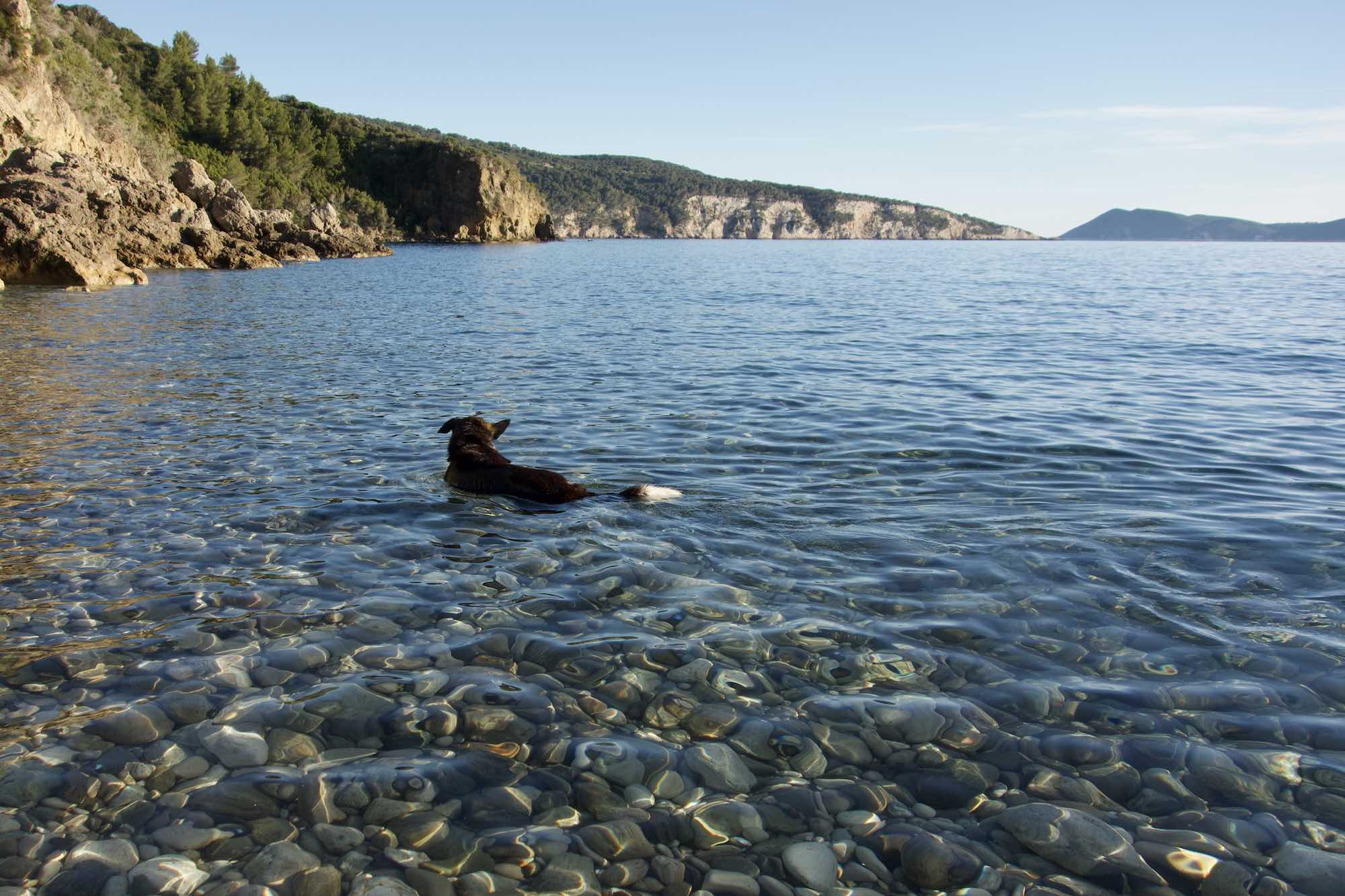 Zora swimming in Novo Posta, Komiza