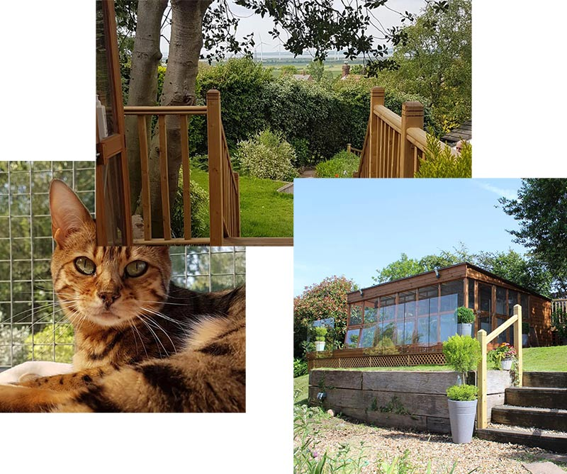 Cattery collage - feature.
