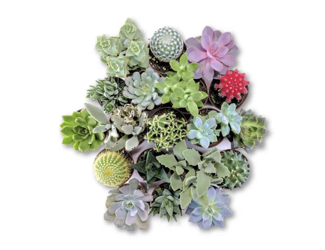 Planet Collective The 'Everything' Succulent Bundle