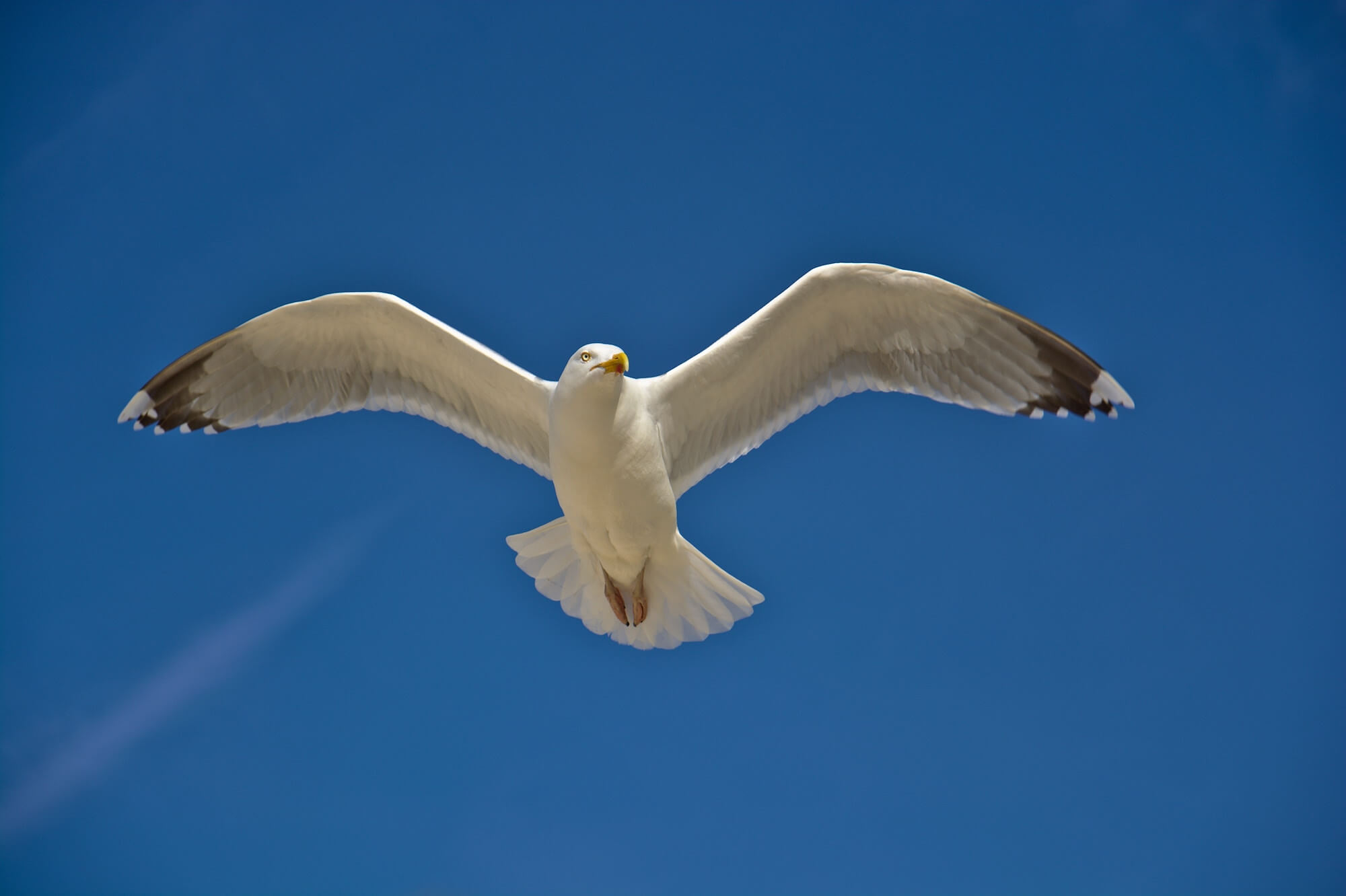 A picture of a seagull flying above the viewer