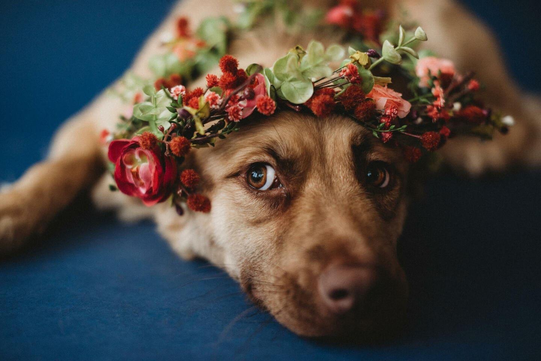 Dog Flowers Richland Michigan Wedding Photography