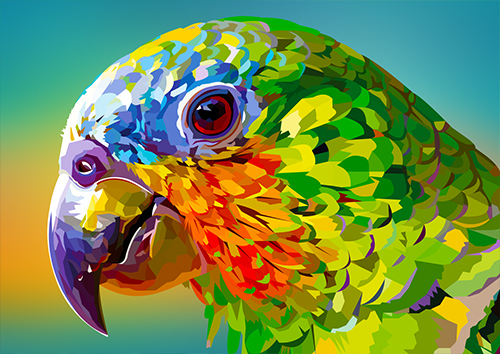 Rainbow Parrot Closeup - NL