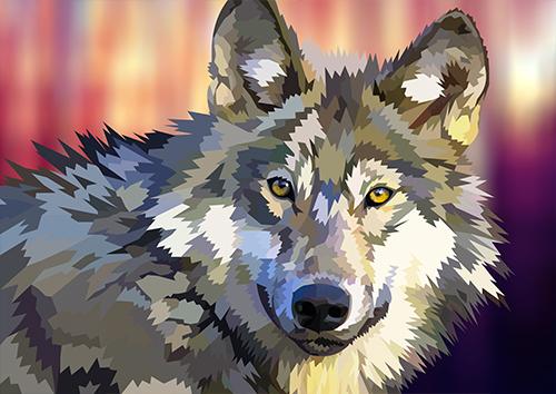 Wolfy Glance - US