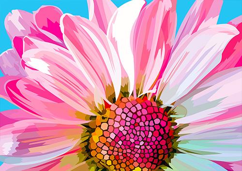 Pink Daisy - NL