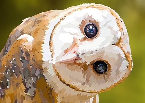 Staring Owl - NL