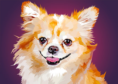 Chihuahua-NL