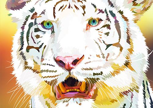 White tiger - US