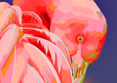 Flamingo - NL