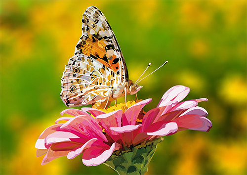 Butterfly on pink flower - US