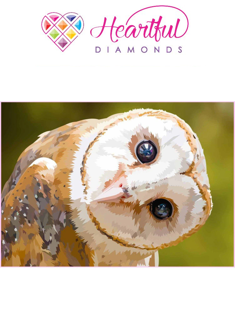 Barn owl - Diamond painting