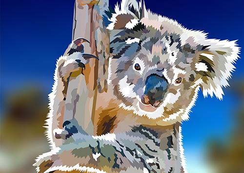 Koala - NL