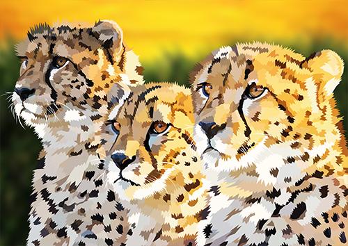 Cheetahs - NL