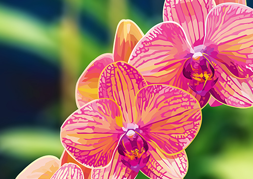 Beautiful Orchids - NL