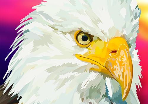 American Eagle - NL