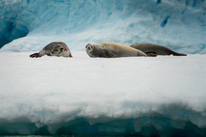 Mission Antarctica2