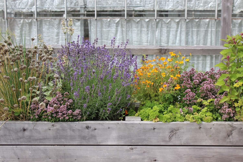 Plantebede der skaber sanselige oplevelser med dufte fra lavandel, timian og salvie.