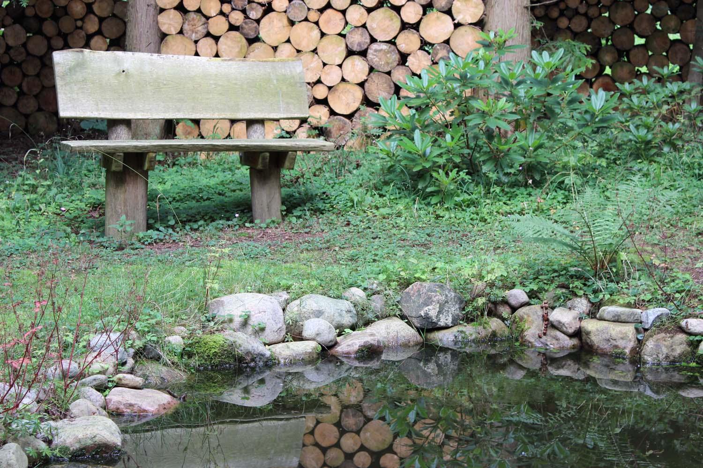 Et mørkt skovrum med en lille dam, som er omkranset af høje nåletræer.